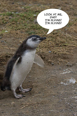 Photograph - Penguin Funnies 09 by John Haldane
