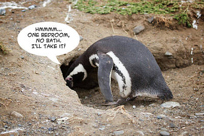 Photograph - Penguin Funnies 10 by John Haldane