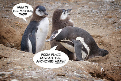 Photograph - Penguin Funnies 11 by John Haldane