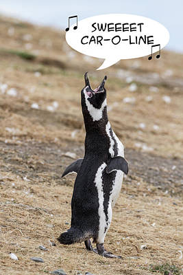 Photograph - Penguin Funnies 12 by John Haldane