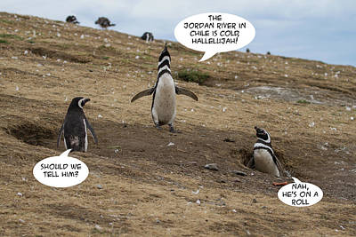 Photograph - Penguin Funnies 13 by John Haldane