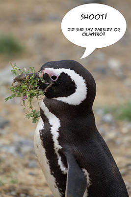 Photograph - Penguin Funnies 14 by John Haldane