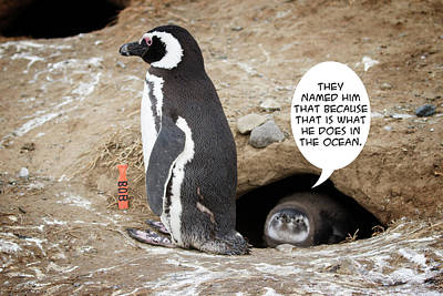 Photograph - Penguin Funnies 16 by John Haldane