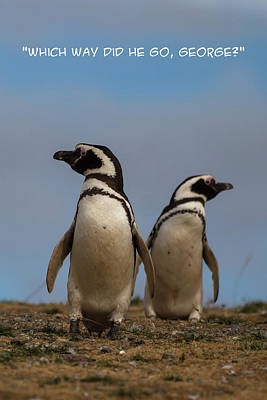 Photograph - Penguin Funnies 17 by John Haldane