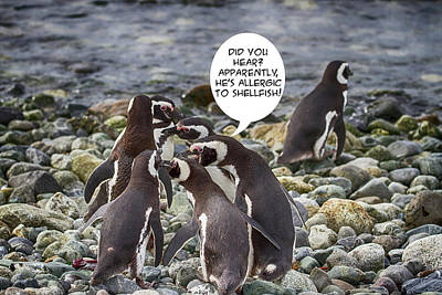 Photograph - Penguin Funnies 19 by John Haldane