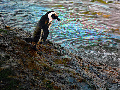 Penguin Going For A Dip Original by Michael Durst