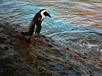 Penguin Going For A Dip Art Print