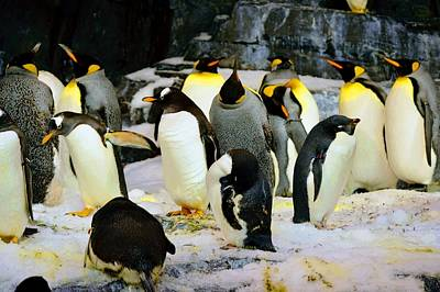 Photograph - Penguin March  by Joseph Caban