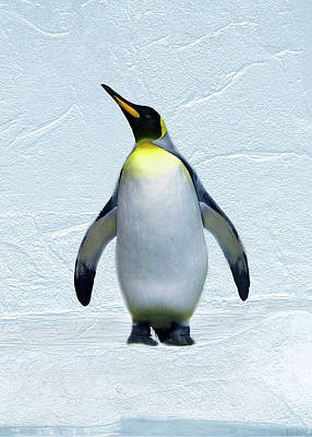 Digital Art - Penguin by Steve Karol