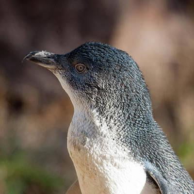Photograph - Penguin by Steven Ralser