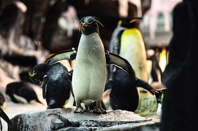 Photograph - Penguin Dance by Joseph Caban