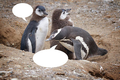 Photograph - Penguins Are Funny 11 by John Haldane