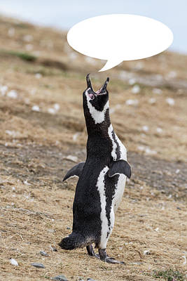 Photograph - Penguins Are Funny 12 by John Haldane