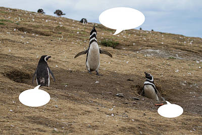 Photograph - Penguins Are Funny 13 by John Haldane