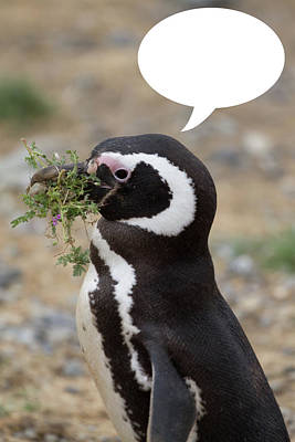 Photograph - Penguins Are Funny 14 by John Haldane
