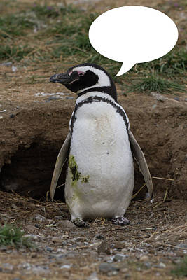 Photograph - Penguins Are Funny 15 by John Haldane