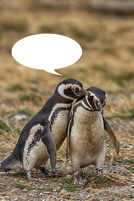 Photograph - Penguins Are Funny 18 by John Haldane