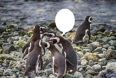 Photograph - Penguins Are Funny 19 by John Haldane