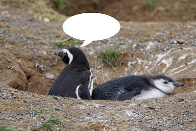 Photograph - Penguins Are Funny 2 by John Haldane