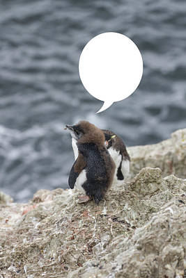 Photograph - Penguins Are Funny 21 by John Haldane