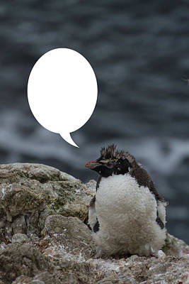 Photograph - Penguins Are Funny 22 by John Haldane