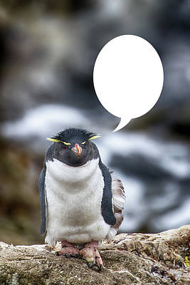 Photograph - Penguins Are Funny 23 by John Haldane
