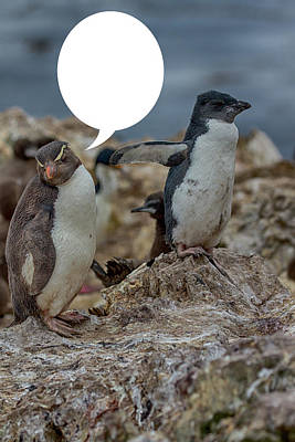 Photograph - Penguins Are Funny 24 by John Haldane