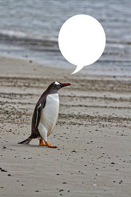 Photograph - Penguins Are Funny 27 by John Haldane