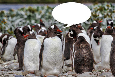 Photograph - Penguins Are Funny 28 by John Haldane