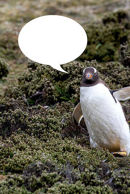 Photograph - Penguins Are Funny 29 by John Haldane