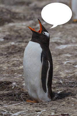 Photograph - Penguins Are Funny 31 by John Haldane
