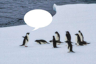 Photograph - Penguins Are Funny 32 by John Haldane