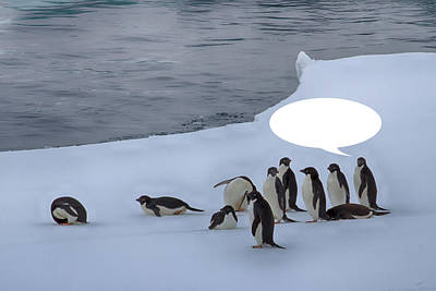 Photograph - Penguins Are Funny 33 by John Haldane