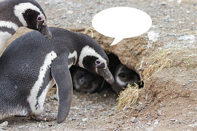 Photograph - Penguins Are Funny 4 by John Haldane