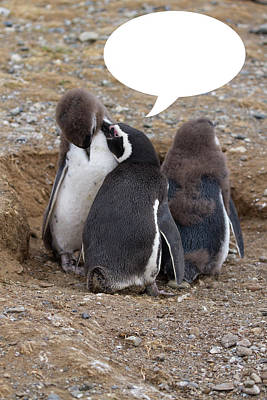 Photograph - Penguins Are Funny 5 by John Haldane