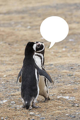 Photograph - Penguins Are Funny 6 by John Haldane