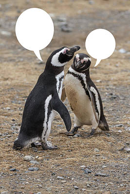 Photograph - Penguins Are Funny 7 by John Haldane