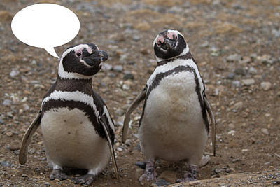 Photograph - Penguins Are Funny 8 by John Haldane
