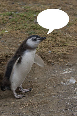 Photograph - Penguins Are Funny 9 by John Haldane