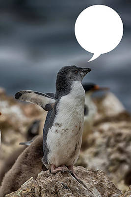 Photograph - Penguins Are Funny by John Haldane