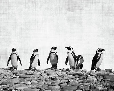 Penguin Wall Art - Photograph - Penguins by Delphimages Photo Creations
