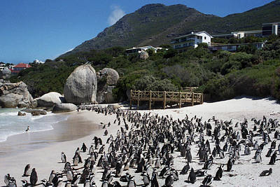 Penguin's Of Africa Original by Terence Davis