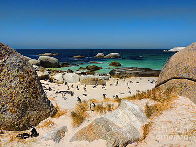 Safari - Penguins on Simons Beach by Tanja Riedel