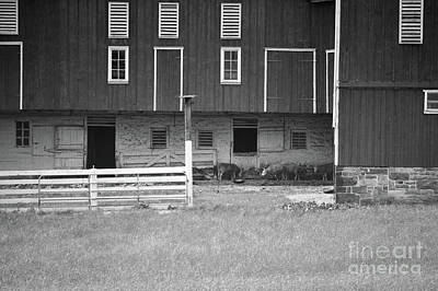 Photograph - Pennsylvania Barn Animals Landscape by Andrea Hazel Ihlefeld