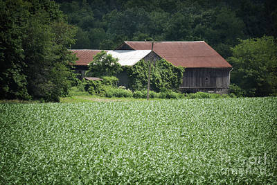 Photograph - Pennsylvania Barn Cornfield by Andrea Hazel Ihlefeld