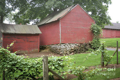 Photograph - Pennsylvania Barn Vineyard by Andrea Hazel Ihlefeld