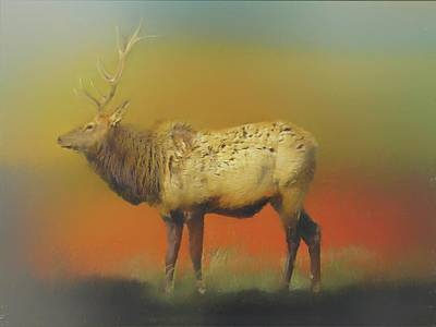 Digital Art - Pennsylvania Bull Elk by Rusty R Smith