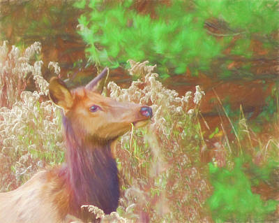 Digital Art - Pennsylvania Cow Elk Feeding. by Rusty R Smith