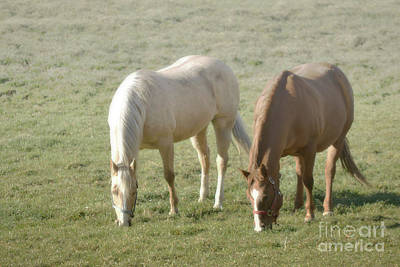 Photograph - Pennsylvania Dreamy Horse Pair by Andrea Hazel Ihlefeld