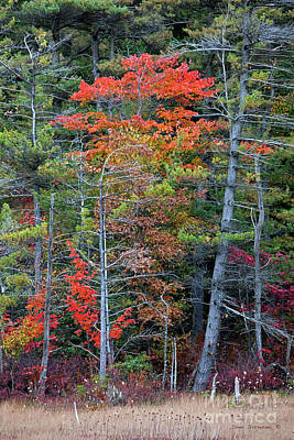 Pennsylvania Laurel Highlands Autumn Art Print by John Stephens
